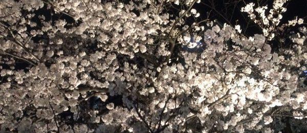 大崎 お花見