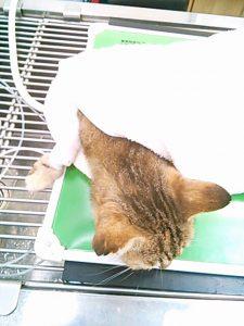 猫と歯周病